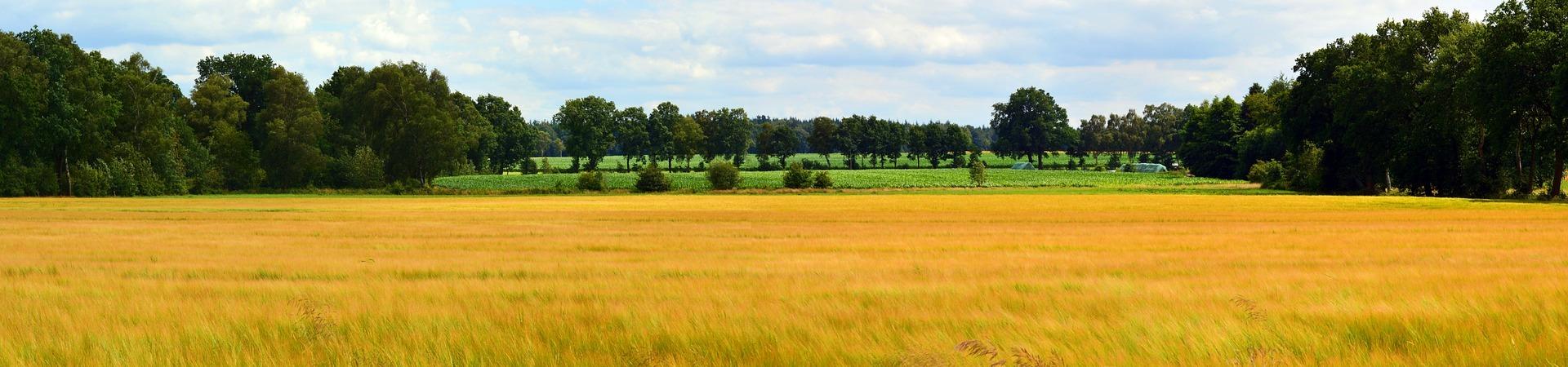Landscape 1506558 1920 1